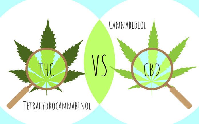 CBD-THC-Différences